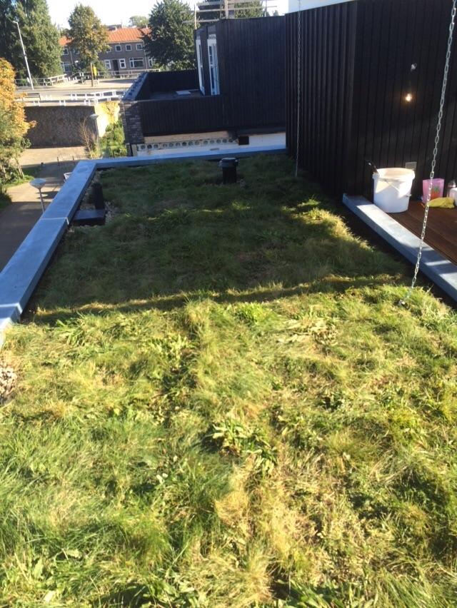 Groene daken subsidie in Almelo