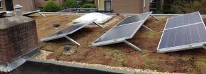 Groen op Dak ook in combinatie met uw zonnepanelen - De specialist in groene dakbedekking