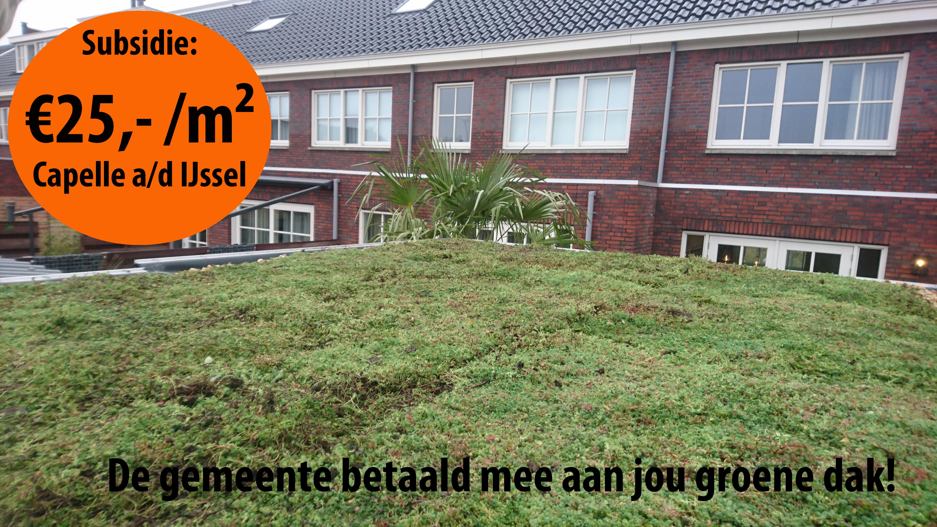 Subsidie sedumdak Capelle aan den IJssel (2017)