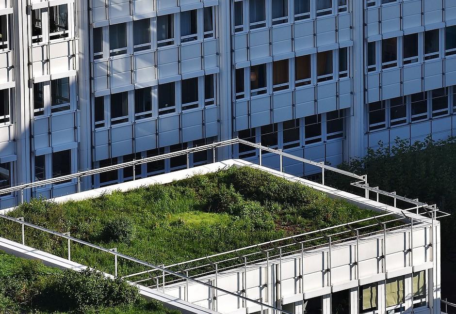 Subsidie op groene daken Groningen