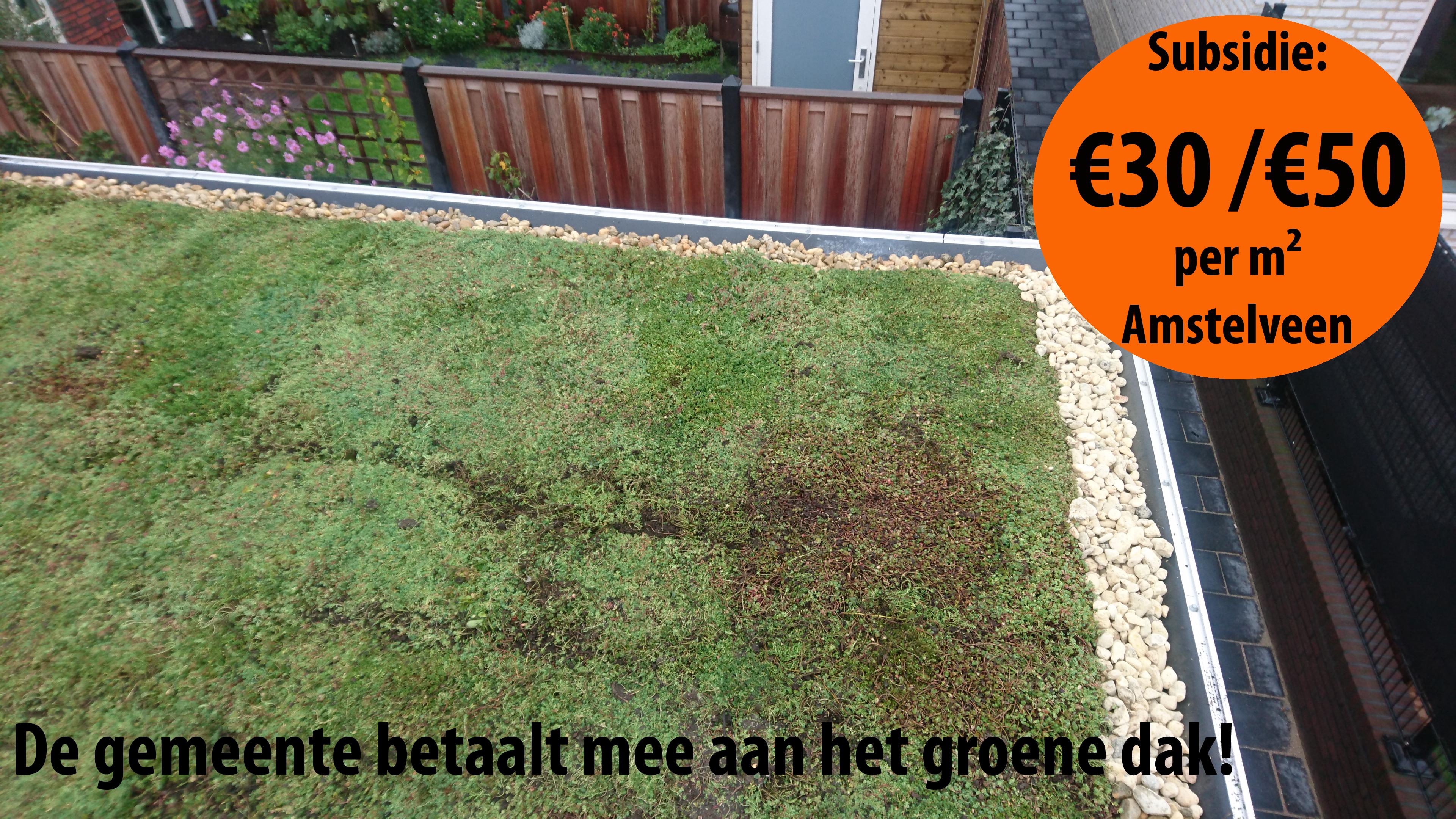 Subsidie voor groene daken in Amstelveen