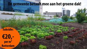 de foto is van de dakakkers in Rotterdam. Een echte moestuin op het dak!