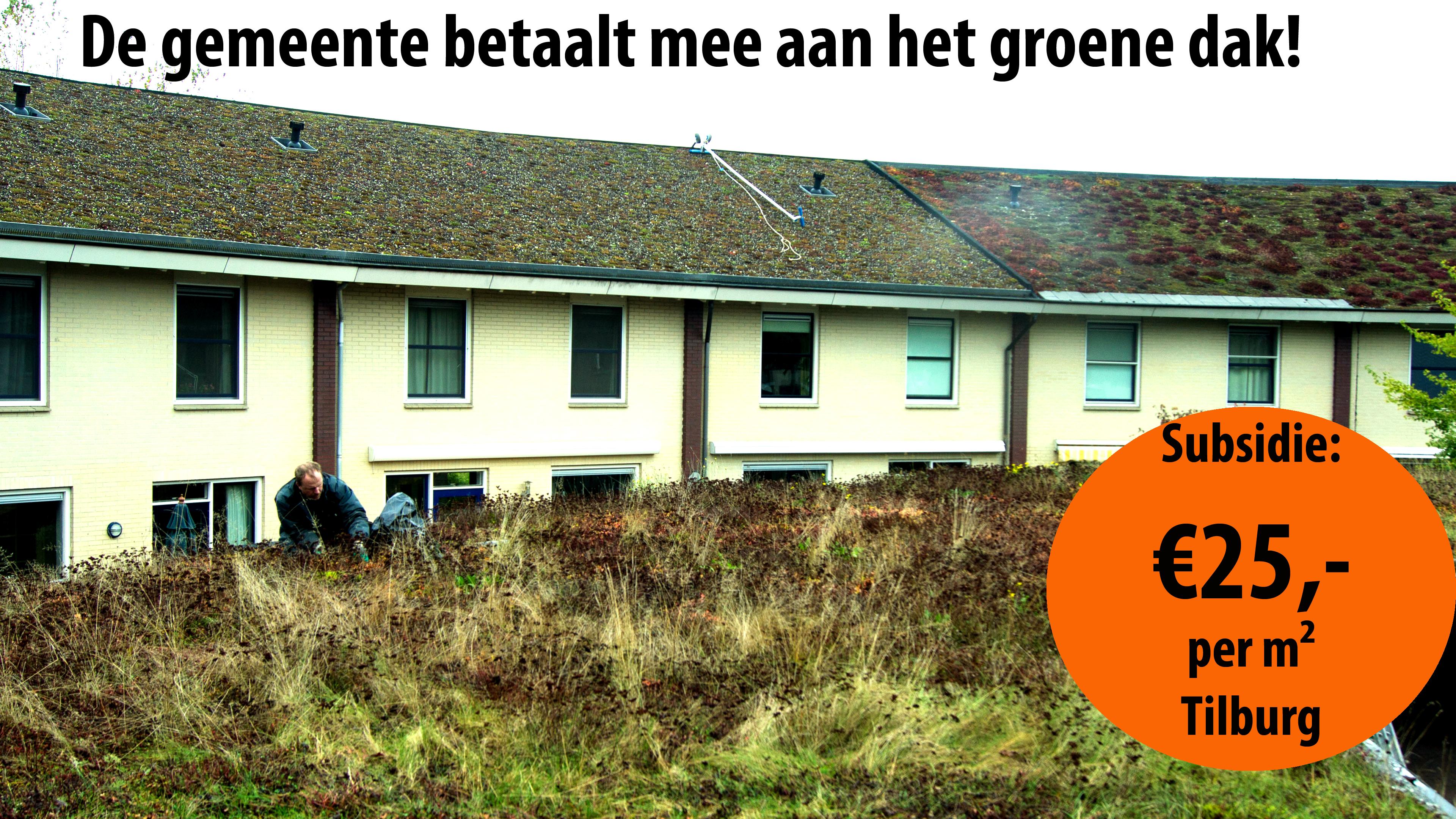 Nieuwe subsidie groene daken in Tilburg