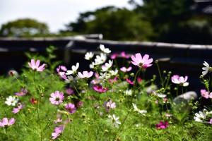 een groendak met wilde bloemen