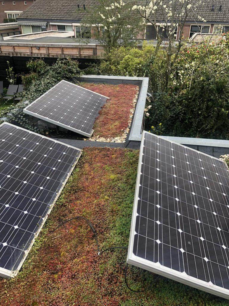 zonnepanelen op een sedumdak behalen meer rendement. een van de voordelen van groene daken
